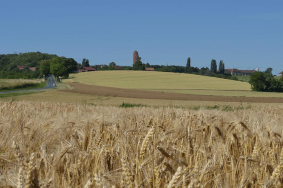 blé-papote-pates